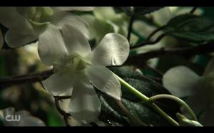 Tree Flower Screencap, Reign S01E01