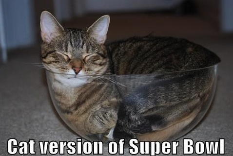 funny-pictures-the-big-game-kittehs-iz-gettin-reddy-teh-sooper-bowl