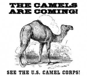 Douglas-the-Camel-Event-Poster-Legal